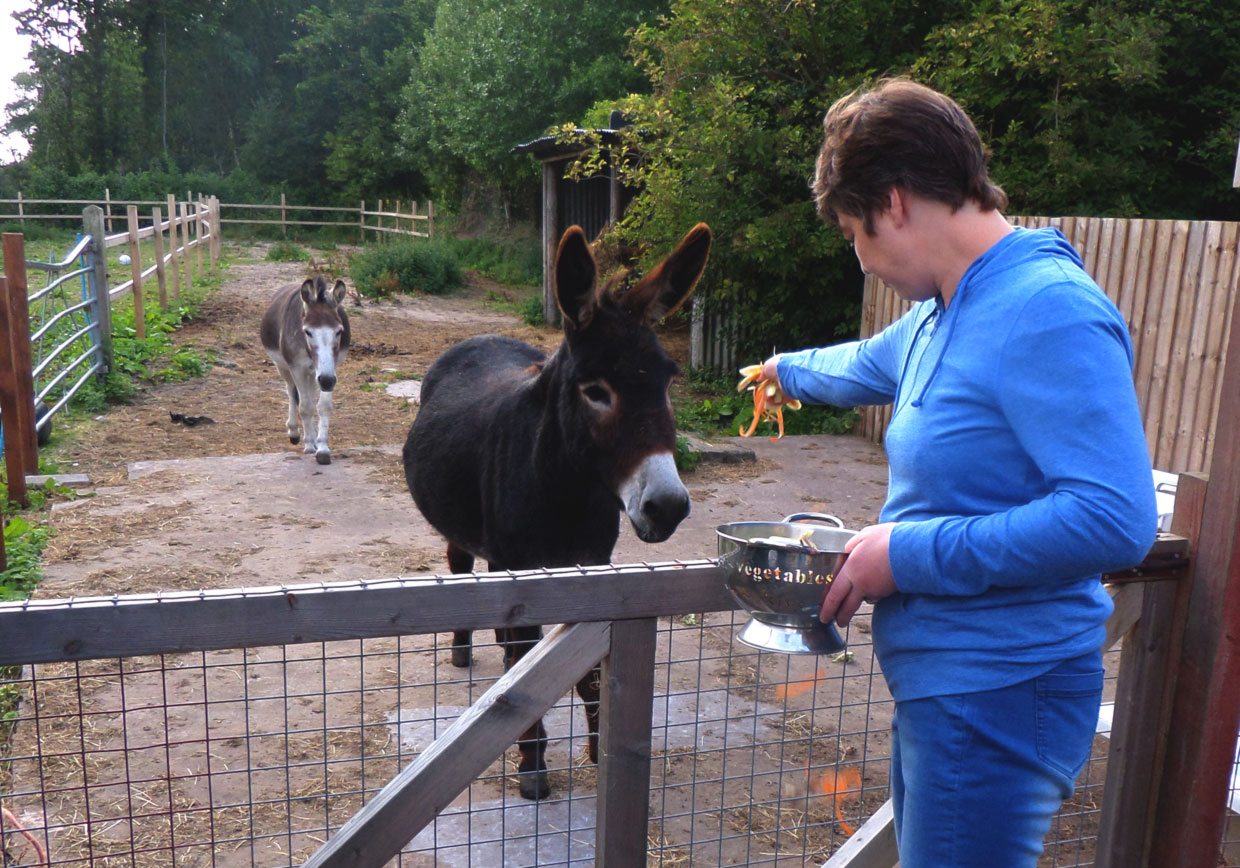 Therapy-Donkey