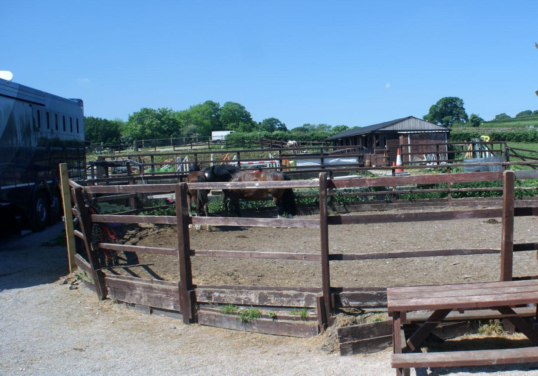 Therapy-Farm