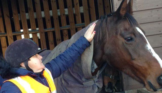 equestrian-care